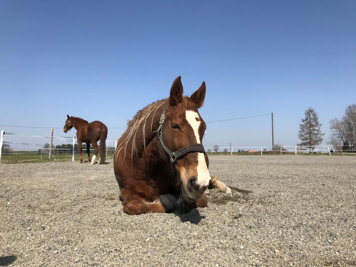 Je länger ein Pferd sich frei bewegen kann, desto besser.