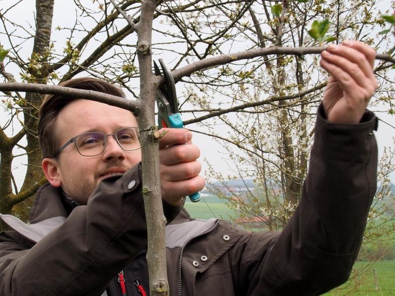 Kreisfachberater Markus Breier beim fachgerechten Zuschneiden der jungen Bäume.