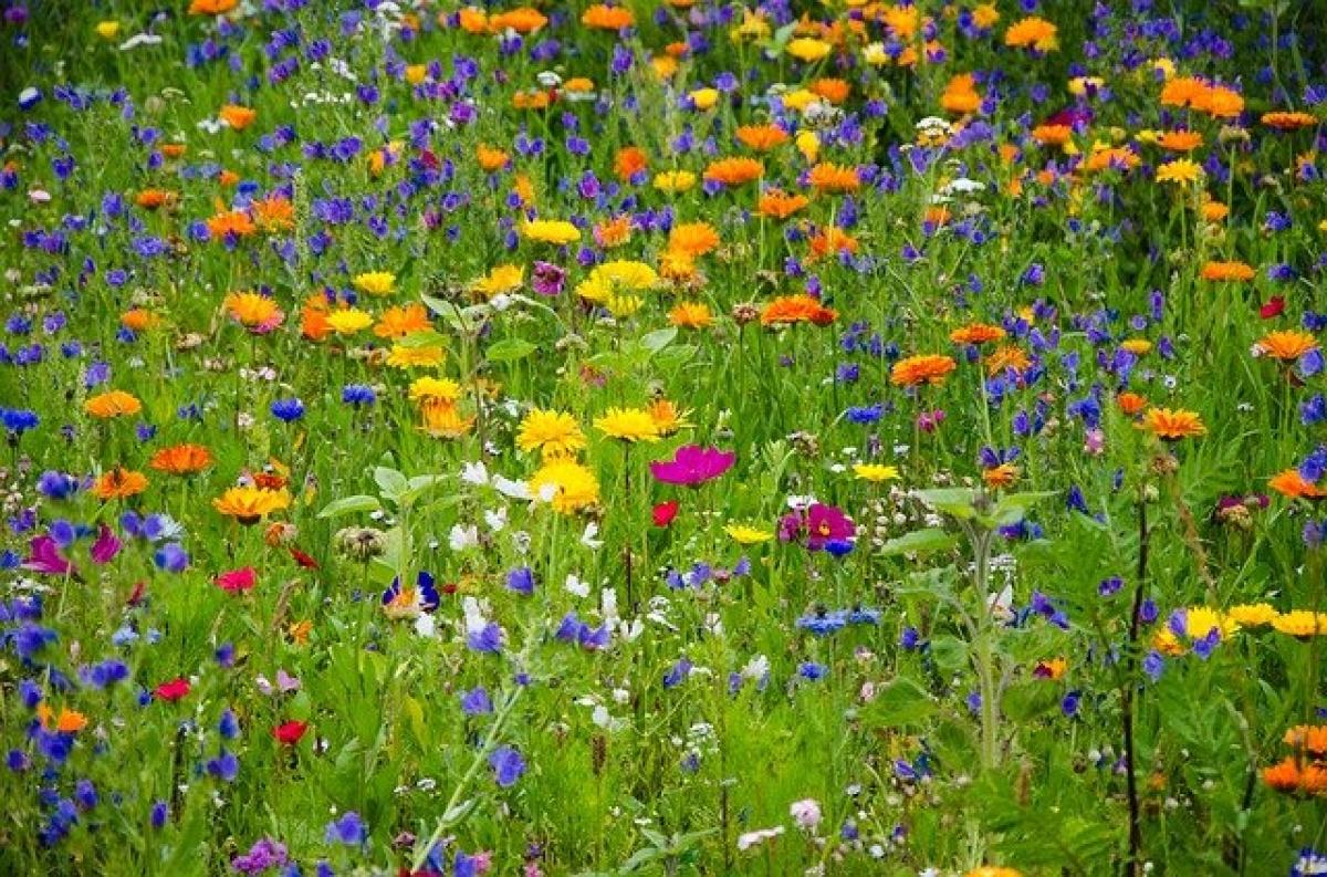 Patenschaft für Blühflächen