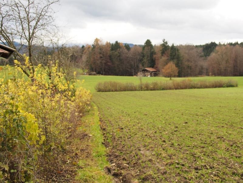 Als Erstes begutachteten einige der Teilnehmer eine 30jährige Hecke beim Hof von Matthias Spiegelsperger in Wimmern bei Teisendorf. Der Abschnitt im Bild wurde letztes Jahr auf den Stock gesetzt.