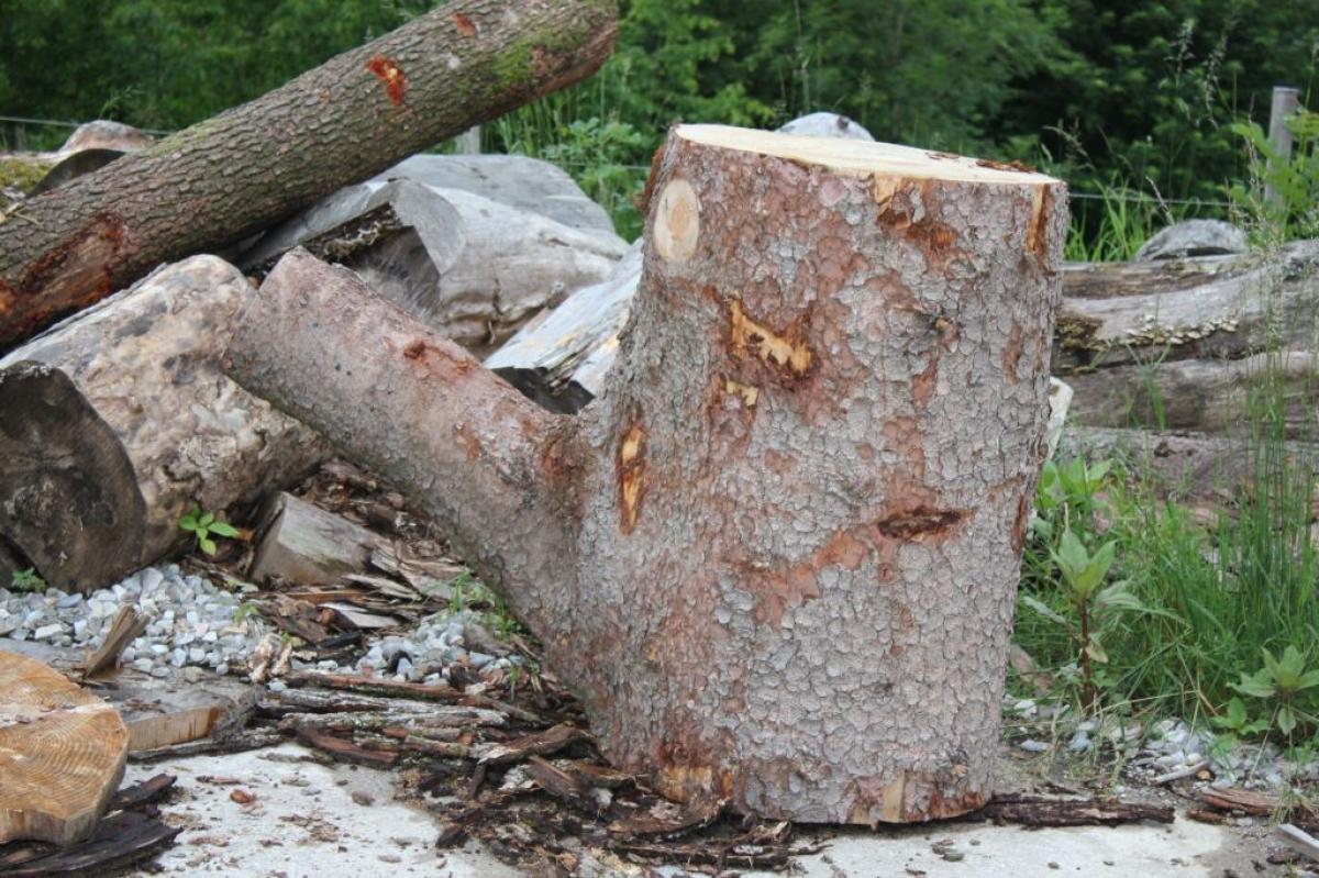 Dieser Holzstamm mit seinem markanten Ast wird – das weiß Motorsägenschnitzer Max Poschner schon jetzt – eines Tages eine Kaffeekanne.