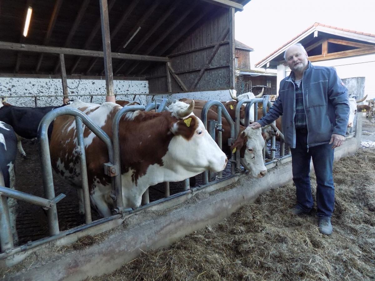 Franz Obermeyer streichelt einer seiner Kühe über den Kopf. Er ist seit vielen Jahren aus Überzeugung ein Demeter-Landwirt.