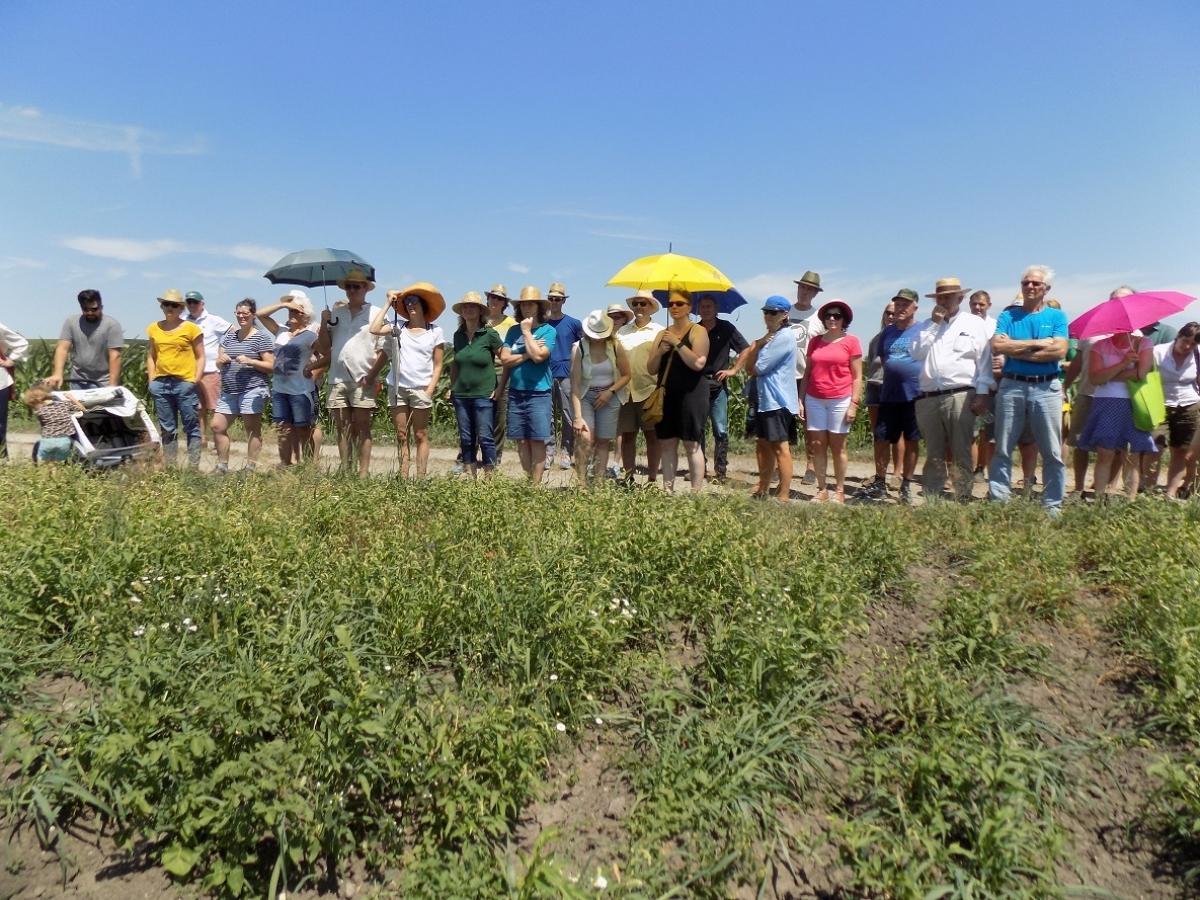 Trotz der Hitze beteiligten sich im Sommer 2019 sehr viele Interessierte an der Felderbegehung mit Verkostung, zu der Biobauer Franz Obermeyer und die ÖMR in Tengling geladen hatten.