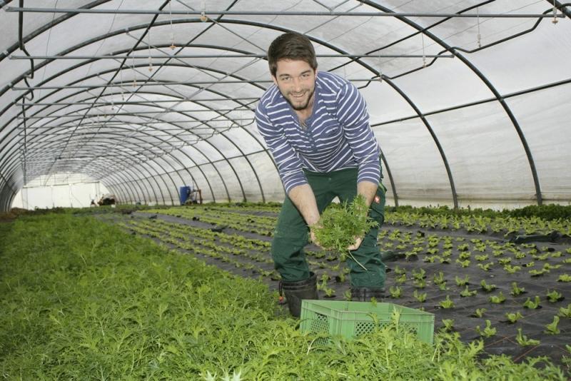 Es grünt so grün...Michael Steinmaßl in einem seiner beiden Gewächshäuser mit einem Büschel Asia-Salat.