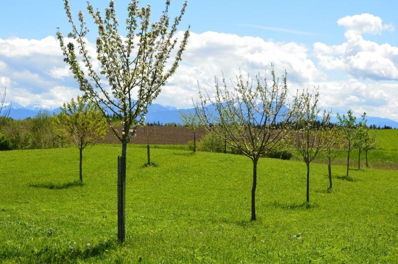 Anmeldeschluss für die Herbstpflanzaktion